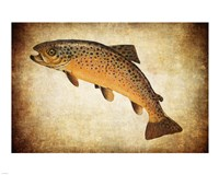Brown Trout II Fine Art Print