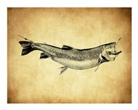Trout - black and white Fine Art Print