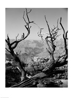 USA, Arizona, Grand Canyon, Colorado River seen from South Rim Fine Art Print