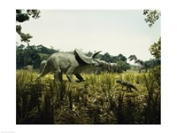 Triceratops with a tyrannosaur and a torosaurus in a forest - various sizes