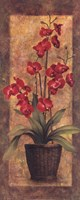 Potted Orchid - Red Fine Art Print