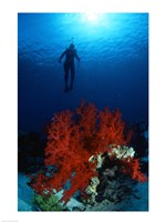 Soft Coral Red Sea Fine Art Print