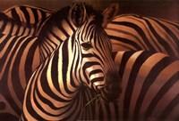 """Zebra Grande by T.C. Chiu - 36"""" x 24"""""""