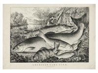 American game fish Fine Art Print