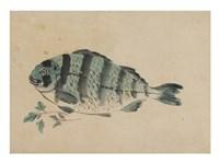 Fish - various sizes
