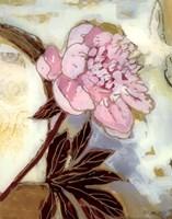 Pink Peony Blossom Fine Art Print