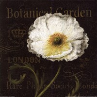 Botanical Garden II Fine Art Print