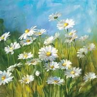 Summer Field II Fine Art Print