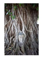 Buddha Head in the Roots of a Tree Fine Art Print