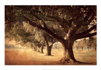 Island Oak Fine Art Print