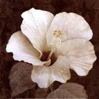 Verdant Blossom Framed Print