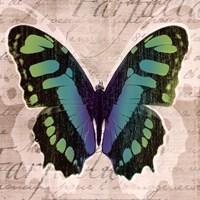 Butterflies II Fine Art Print