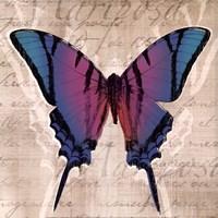 "Butterflies IV by Tandi Venter - 12"" x 12"""