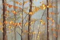 Delicate Branches Fine Art Print