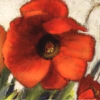 "Poppy Splendor Square II (Close up) by Lanie Loreth - 12"" x 12"""