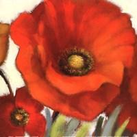 Poppy Splendor Square I Fine Art Print