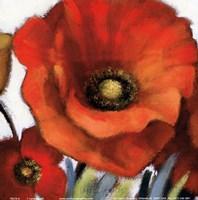 "Poppy Splendor Square I (Closeup) by Lanie Loreth - 6"" x 6"""