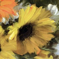 Sunflower Square II Framed Print