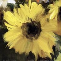 Sunflower Square I Framed Print