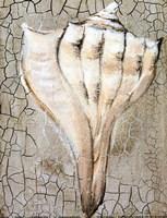Seashells II Fine Art Print