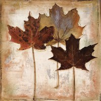 Nautral Leaves III Fine Art Print