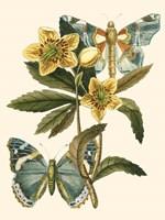 Butterfly Oasis III Fine Art Print