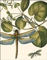 Dragonfly Medley I Fine Art Print