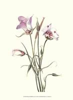"Delicate Wildflowers IV - 10"" x 13"""