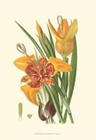Striking Lilies I Fine Art Print
