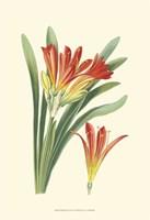 Striking Lilies III Fine Art Print