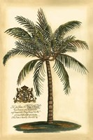 British Colonial Palm III Framed Print