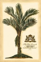 British Colonial Palm IV Fine Art Print