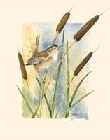 Marsh Wren and Cattails Fine Art Print