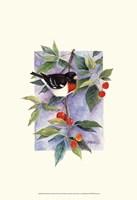 Red-Breasted Grosbeak Fine Art Print