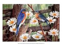 Serenade in Blue Fine Art Print