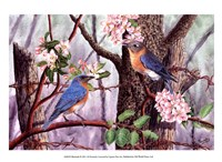 Bluebirds Fine Art Print