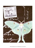 Le Papillon Script I Framed Print