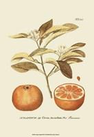 "13"" x 19"" Fruit Art"