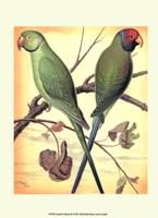 "10"" x 13"" Parrot Pictures"