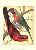 """10"""" x 13"""" Parrot Art"""