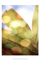 Tropical Daydream II Framed Print