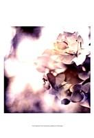 Purple Dusk II Fine Art Print