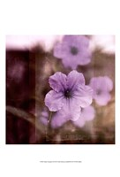Purple Tranquility II Framed Print