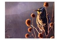 Meadowlark Fine Art Print