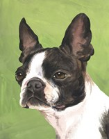 Dog Portrait-Boston by Jill Sands - various sizes - $18.99