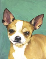 Dog Portrait-Chihuahua by Jill Sands - various sizes - $17.49
