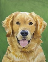 Dog Portrait-Golden by Jill Sands - various sizes - $18.99