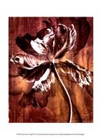 Bronze Parrot Tulip II Framed Print
