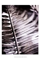 Silvery Frond I Fine Art Print