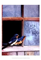 Barn Swallows Window Fine Art Print